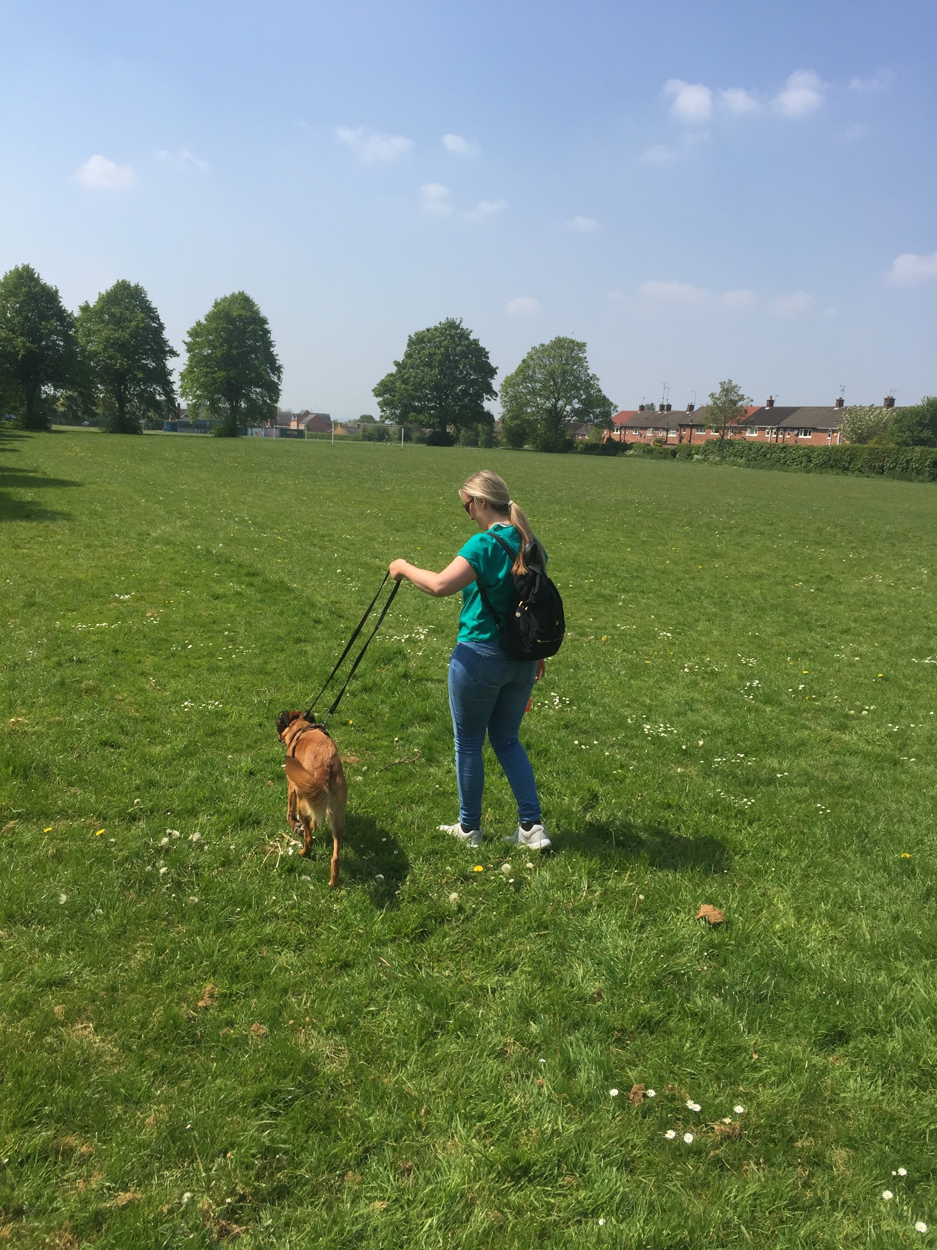 Petmates Chester - Professional Dog Walking & Pet Sitting | 70 Cross Green, Chester CH2 1QR | +44 7709 768986