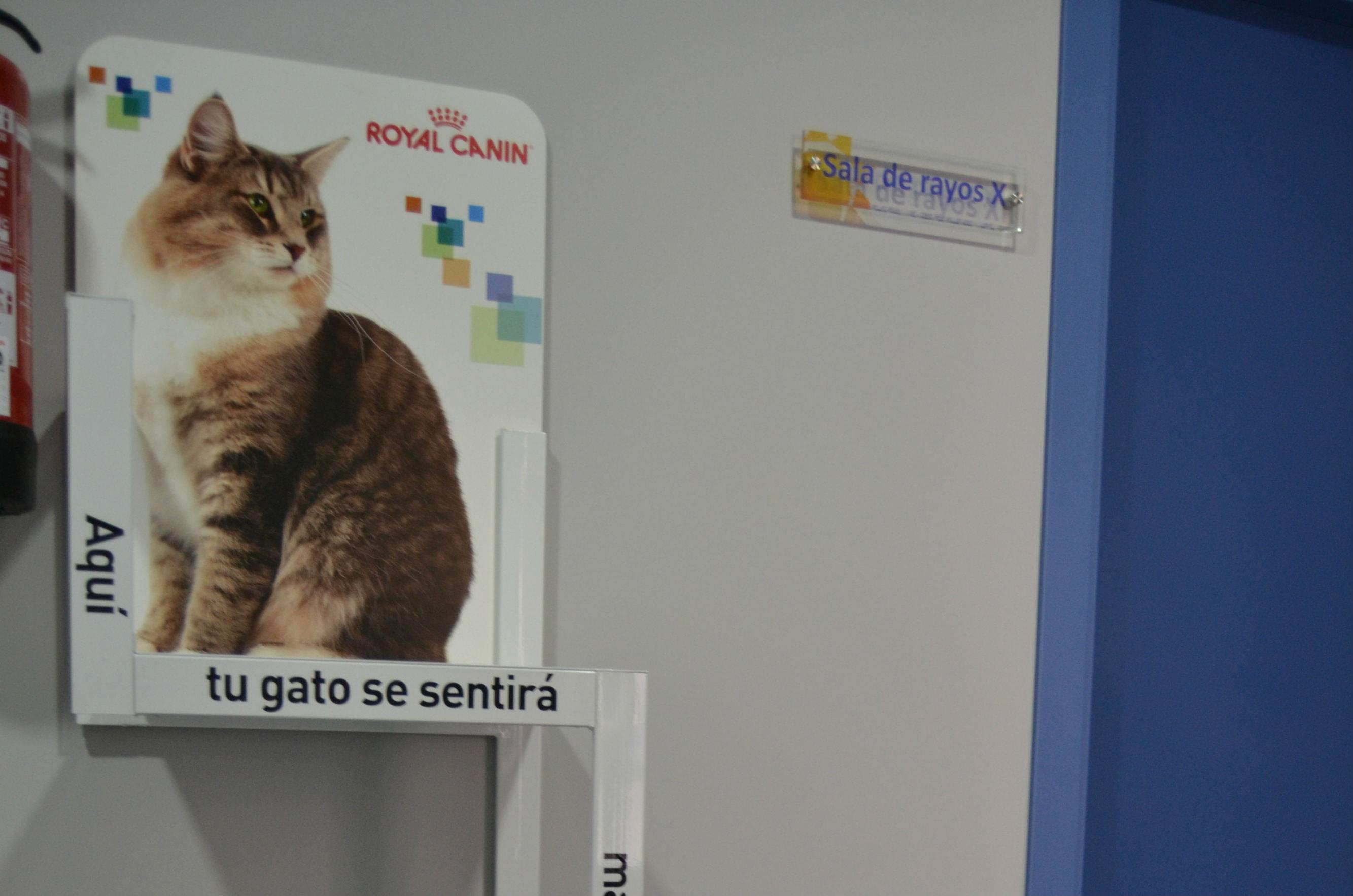 Clínica Veterinaria Montesol Cáceres | Urgencias veterinarias 24 horas | Calle las Avutardas, 5, 10004 Cáceres | +34 629 939 685