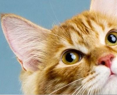 PawsWatch Professional Pet Sitting LLC | Meridian, ID, 83646 | +1 (208) 288-2810